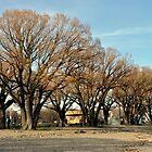 Spring Trees by VikasGupta
