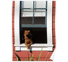 How much is that doggy in the window? Poster