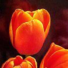 Orange Sun Kisses by PatChristensen