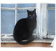 Black farm cat Poster