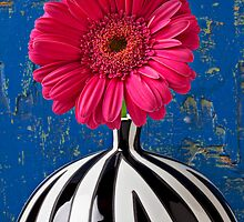 Dark Pink Mum In Striped Vase by Garry Gay
