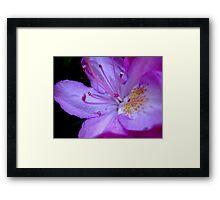 The inner workings of a flower  ^ Framed Print