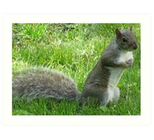 Standing Squirrel Art Print