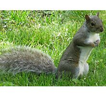 Standing Squirrel Photographic Print