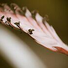 A hint of pink by Nathalie Chaput