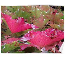 The beauty of the Virginia Creeper in Autumn Poster