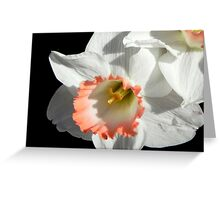 Pretty Daffodil ©  Greeting Card