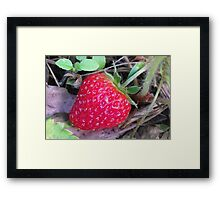 Giant Strawberry Framed Print
