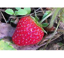 Giant Strawberry Photographic Print