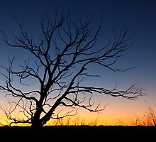 Tree Silhouette at Sunset, Edithburgh, South Australia by burrster