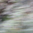 Natural patterns 1 by kossimarsalsa