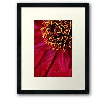 Tree Peony  macro Framed Print