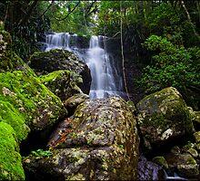 Selva Falls by Elizabeth4