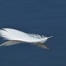 Egret Feather on Pond by Joe Jennelle