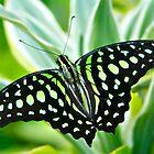 Butterfly by Andrey Kudinov