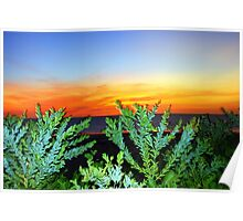 Contrasts At Sunset Poster