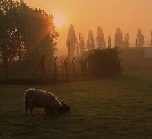 Sunrise - Sheep Field by Anthony Faulkner