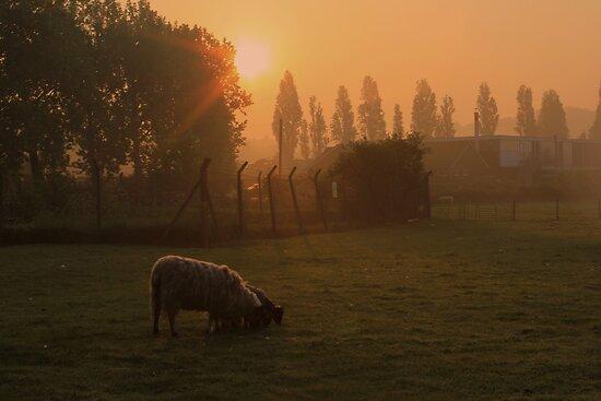 Sunrise - Sheep Field by Anthony Faulkner