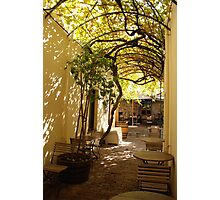 under the grape vine Photographic Print