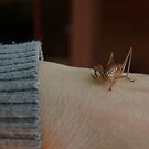 Hello Mr Grasshopper, How Are You This Morning? by tarynb