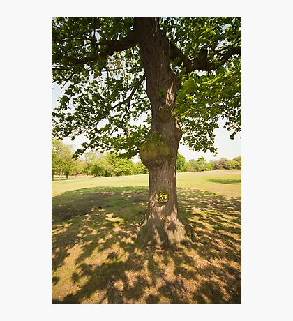 Tree Light & Shade Photographic Print