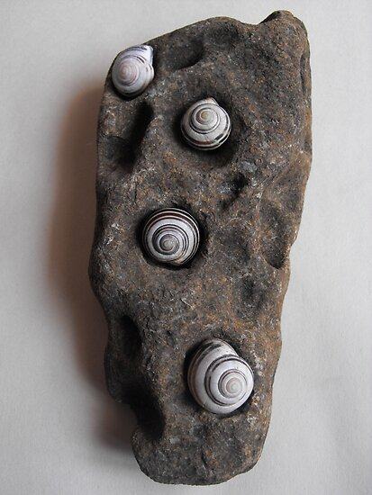 Shells In Stone by Tracy Faught