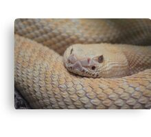 It's All Happening at the Zoo Canvas Print