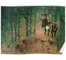 Stag in the morning mist Poster