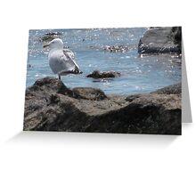 Seagull Rock Greeting Card