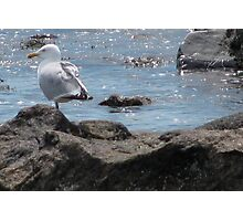 Seagull Rock Photographic Print