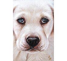 Lab pup Photographic Print