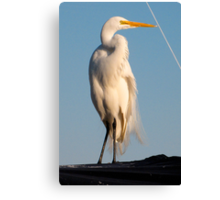 Great Egret and Line... Canvas Print