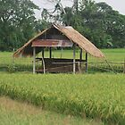 THATS A RICE HOUSE. by newcastlepablo