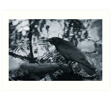 Crow mirroring in water Art Print