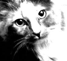 Shelby in Black & White by Lenore Senior