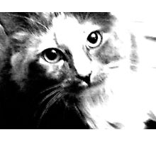 Shelby in Black & White Photographic Print