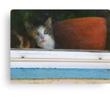 Kitten in the Window Canvas Print