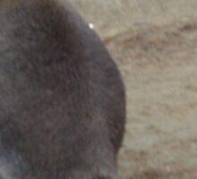 Wallaby Sticker