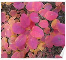 Colorful autumn leaves background Poster