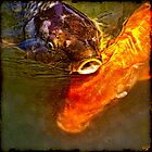This Koi ain't Coy! by Chris Lord