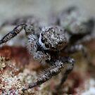 kiss me… I'm a spider by katpartridge