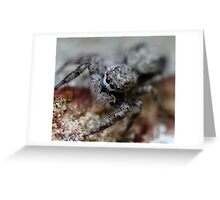 kiss me… I'm a spider Greeting Card