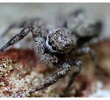 kiss me… I'm a spider Photographic Print