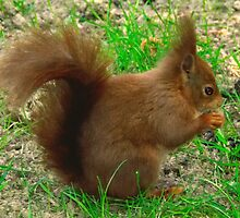 Tufty Fluffytail by Steve