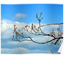 Blue Sky and Budding Red Poster