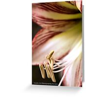 The Stamens. Greeting Card