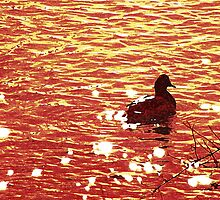 Wyoming-Duck on the River by Lenore Senior