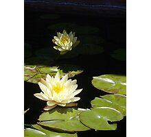 Lily II - Denver Botanic Gardens Photographic Print