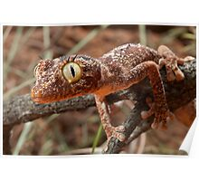 Katherine Spiney Tail Gecko Poster