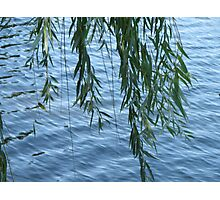 willows dancing Photographic Print